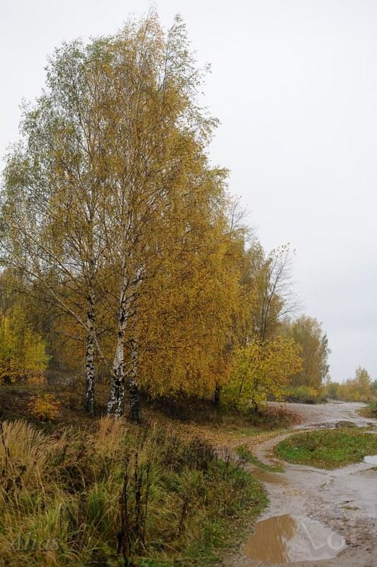 Осень и слякоть