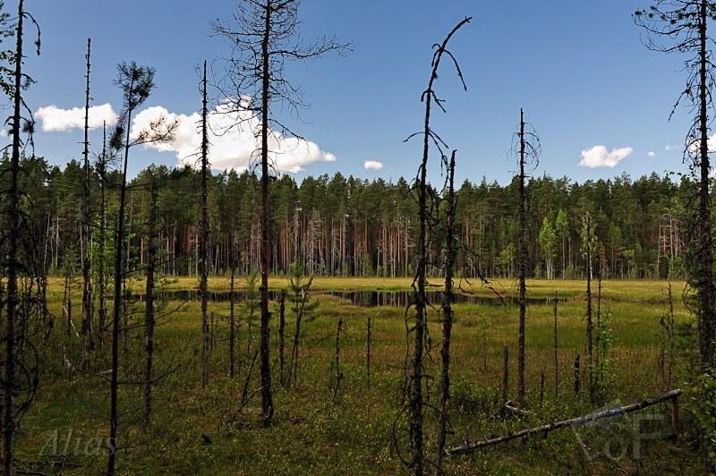 Ламбушки карельских лесов